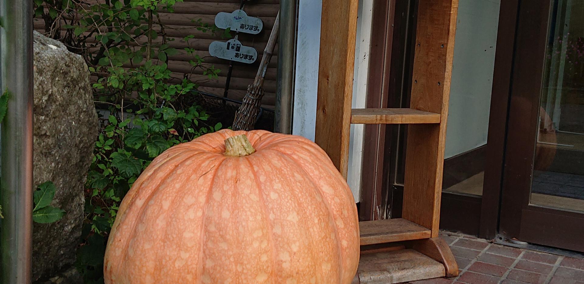 診療所前にかぼちゃ登場