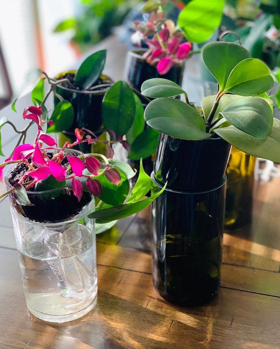 self watering planter.jpg