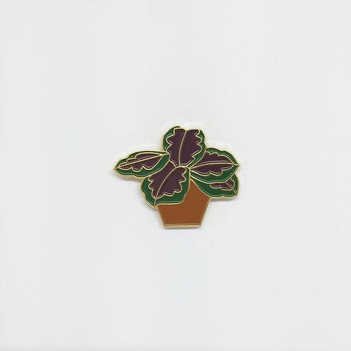 Shelf Life Pin Marantus in Terracotta Pot