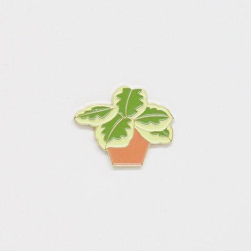 Shelf Life Pin Marantus in Peach Pot