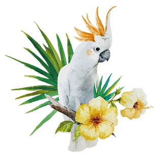 White%20Parrot_edited.png