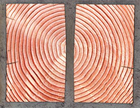 Timber Rings