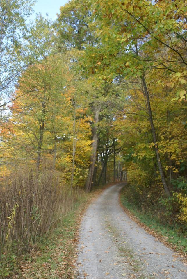 Autumn Drive.jpg