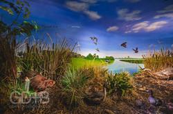 WETLANDS & LAKES