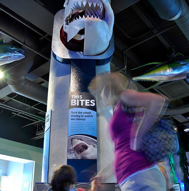 Shark Bite- Toledo Zoo Aquarium