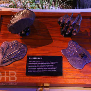 Herbivore Teeth Comparison - The Natural History Museum at the Toledo Zoo