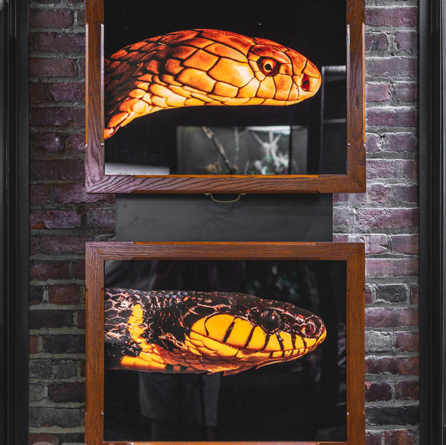 Venomous Snakes- The Natural History Museum at the Toledo Zoo