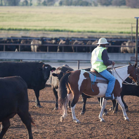 Labour shortages in the feedlot industry