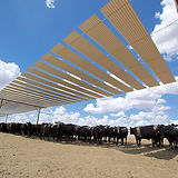 Cattle in Pens_ 421.jpg