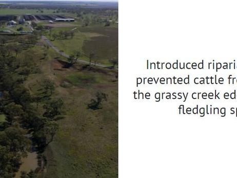 Stockyard - Kerwee regenerates Oakey Creek in environmental initiative