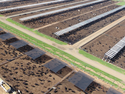 Feedlot industry leads with shade initiative