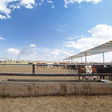 Cattle at Water Trough_ 34.jpg