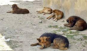 Cachorros abandonados geram incômodo aos moradores no Jardim Paraná