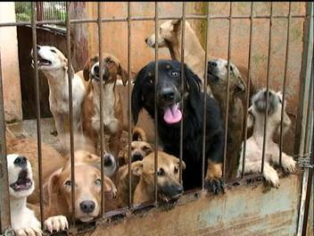 Serginho sugere instalação de Canil Municipal para reduzir a população animal de rua em Campina
