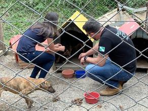 Após denúncias, DPMA prende protetora e interdita abrigo de animais em Quatro Barras