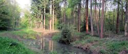 Woodland pond in Breech Wood