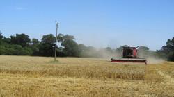 Harvesting 2015