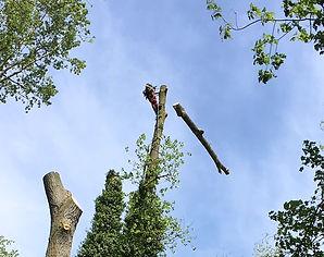 Rougham Lake tree surgery