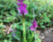 20April-Orchidsx1200.jpg