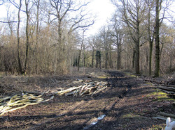 Ride widening in Tinkers Wood