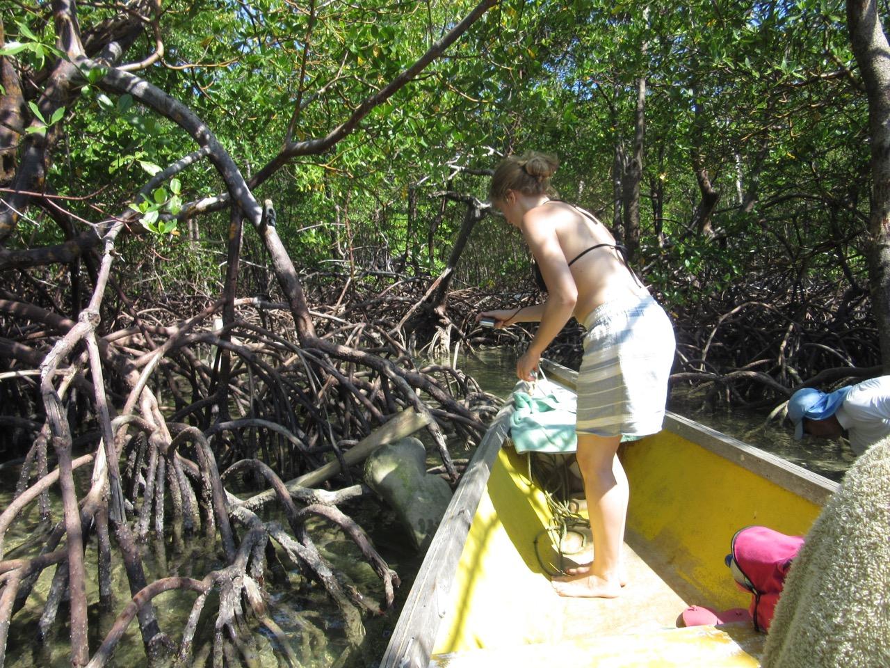 Balade de bateau dans la mangrove