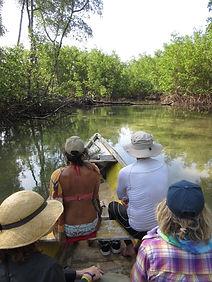 Séjour Brésil 2016 - balade mangrove.jpg