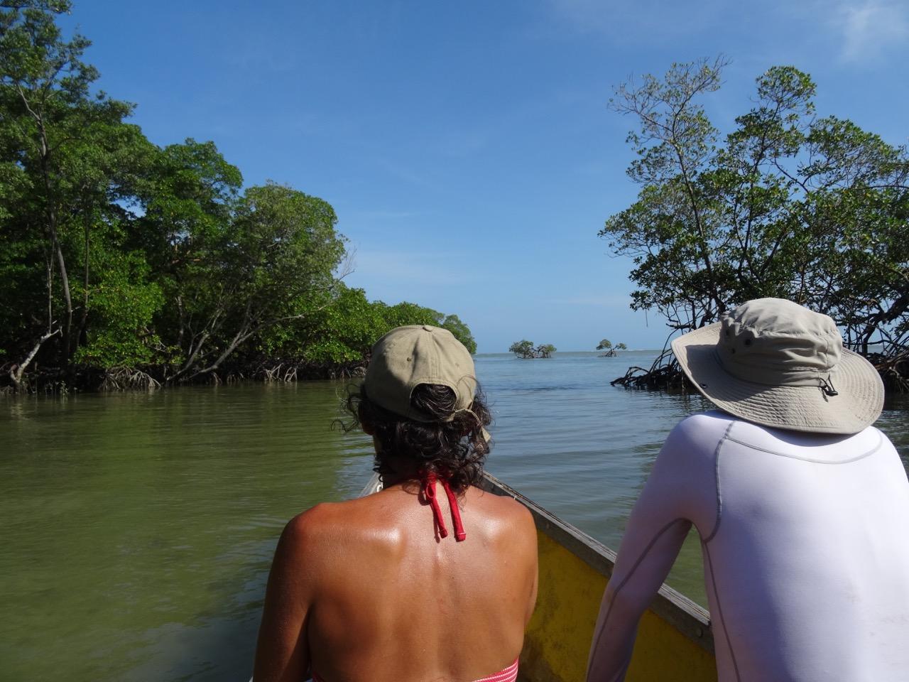 Balade de pirogue dans la mangrove