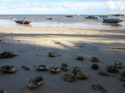 Restes de crab