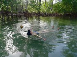 Baignade dans la mangrove