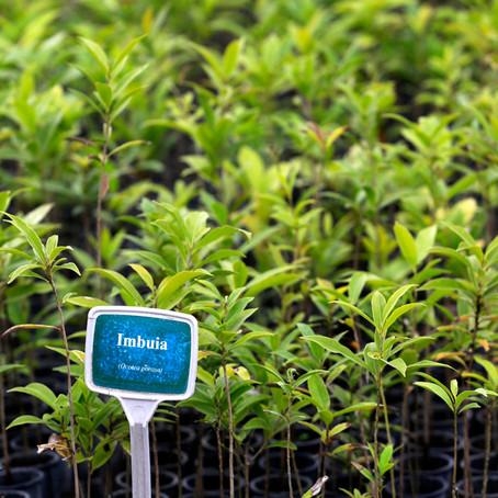 Dia da Árvore terá distribuição de seis mil mudas em Ponta Grossa