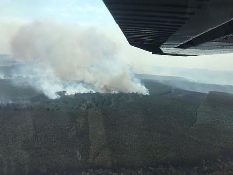 Incêndio florestal de grandes proporções atinge plantação de pinus em Curiúva