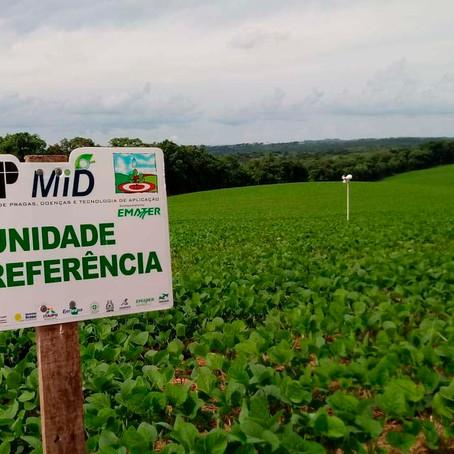 Serviço Alerta Ferrugem da soja inicia no Paraná