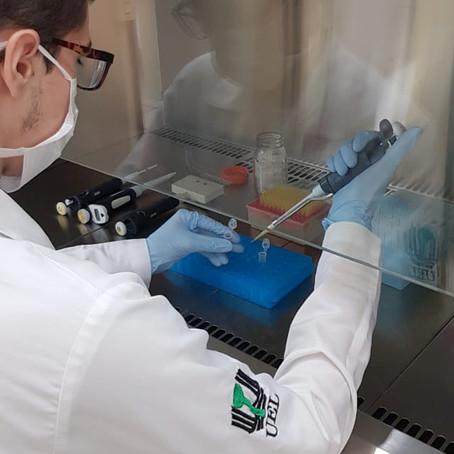 Universidades estaduais do Paraná vão fazer exames para identificar o coronavírus