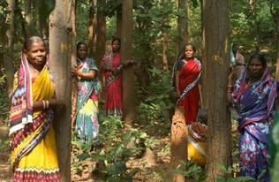 O que é ecofeminismo: as chaves para a dignidade humana e a sustentabilidade na igualdade
