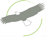 KiwiGroup Eagle.PNG