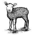 Lambs Wool Textile