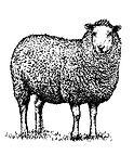 merino wool fabrics textile