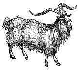 cashmere goat fabrics textile wool