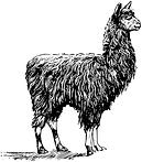 Alpaca Fabric Textile