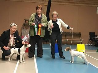 Swedish Terrier Club 5. March 2016