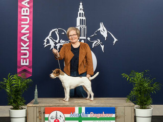 Int. Martini Dog Show Groningen, NL 4.3.2017