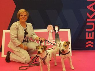 "Happy ""girl"" with happy dogs at European Dog Show 2015:"