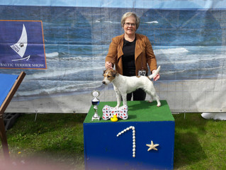 Baltic Terrier Show, Germany 29.04.2017