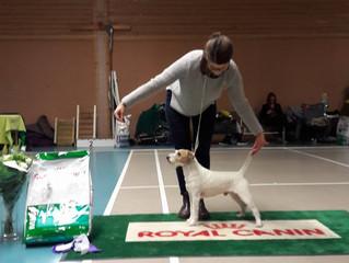 Swedish Terrier Club Sollentuna