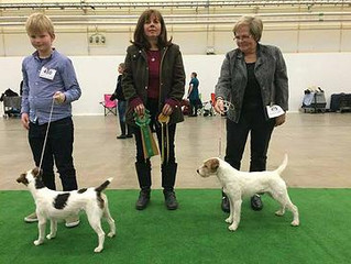 The Swedish Terrier Derby show, 23.11.2014:
