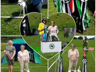 Great day at Danish Terrier Club Svendborg- Terrier Festival day 1, 90 years Jubilee Show