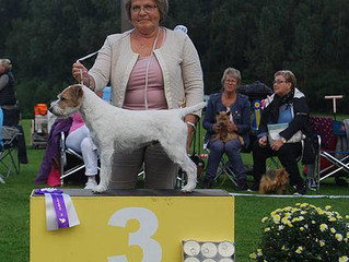 At Swedish Terrier Club Show in Bjuv 12.9.2015