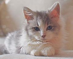 Eddie 💕🐾 #cats#kitten#catsofibstagram#