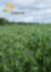 Crop rotations.jpg