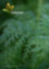 Understanding cover crops.png